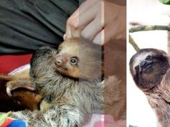 sloths1